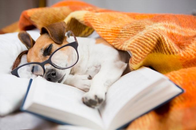 férias-cachorro-estudos