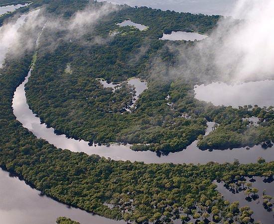 AMAZÔNIA - Estude as características do maior bioma do Brasil.