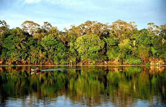 AMAZONIA - Maior bioma brasileiro, a Amazônia ocupa quase metade do território nacional (49,29%) e cobre totalmente os estados do Acre, Amapá, Amazonas, Pará e Roraima, além de estar presente em Rondônia, Mato Grosso, Maranhão e Tocantins. Marcada pela bacia amazônica, a vegetação desse bioma se caracteriza por árvores altas, matas de várzea e igapós. Quase metade das espécies vivas do Brasil estão na Amazônia.