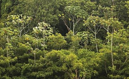 Amazonia4.jpg