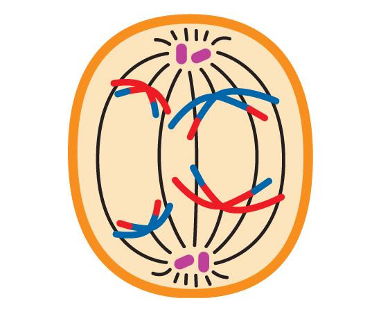 Guia do Estudante - Biologia - 2013