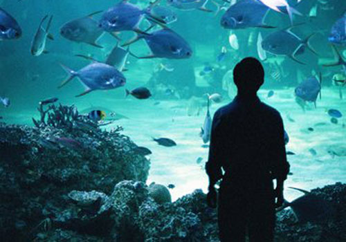 aquario-consulte-2.jpg