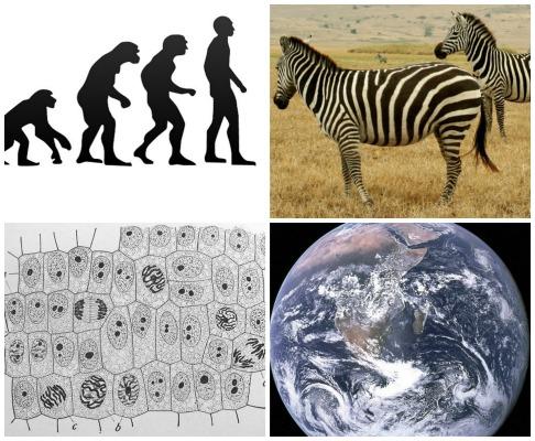 Tudo que vive tem um lugar nas prateleiras da biologia. Veja 10 princípios dessa ciência.