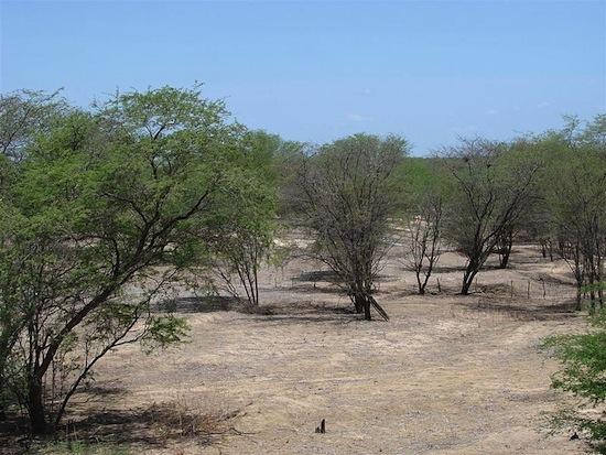 CAATINGA - Esse é o principal bioma do nordeste, estando presente no Ceará, Rio Grande do Norte, Paraíba, Pernambuco, Piauí, Bahia, Sergipe, Alagoas, Maranhão e em 2% do estado de Minas Gerais. Apresenta vegetação de savana estépica, espinhosa e decidual, além de áreas serranas e brejos. Uma marca típica da região é o regime de chuvas, marcado por longos períodos de estiagem, seguido de chuvas intermitentes e um de seca curta seguido de chuvas torrenciais.