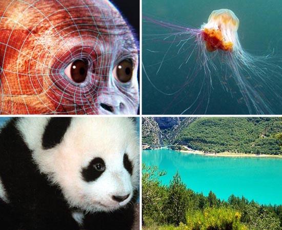 Passe as fotos a seguir para ver detalhes de cada matéria de Biologia que cai no vestibular.