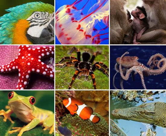 Nas próximas fotos, você vai ver animais cordados e animais invertebrados. Os cordados apresentam, em algum estágio da vida, notocorda (estrutura de sustentação, da cabeça à cauda), tudo neural na região dorsal e fendas branquiais na faringe. Vertebrados é um subfilo dos cordados. São animais que têm esqueleto interno, ósseo ou cartilaginoso, coluna vertebral, cérebro e medula espinhal.<br><br>Não existe uma categoria específica para os invertebrados. O termo foi criado por Carlos Lineu, para indicar os animais que não têm coluna vertebral. Existem invertebrados em vários filos, como o dos cnidários e dos poríferos.