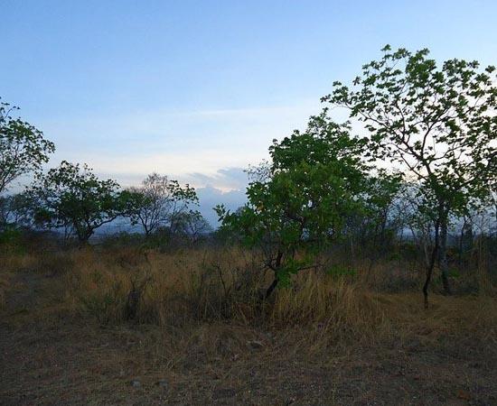 CERRADO - Estude os detalhes do segundo maior bioma brasileiro.