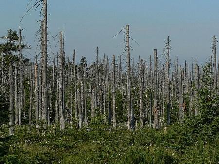 Por falar em chuva, ela ainda por cima pode ser ácida. Isso acontece quando gases poluentes reagem com a água e o ar. A chuva ácida pode destruir plantações, além de afetar a saúde do ser humano. (Foto: Wikimedia Commons)