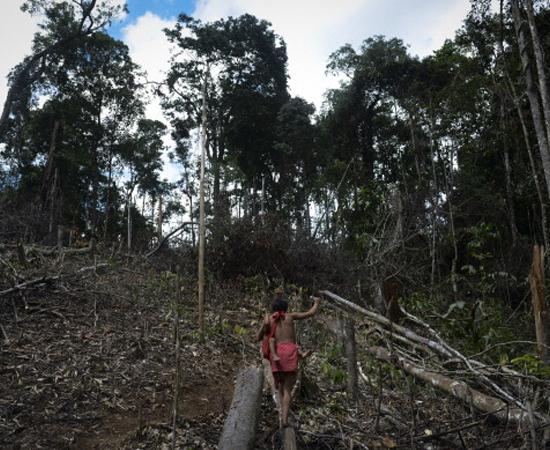 Novo código florestal - Clique em Leia Mais e confira como o tema pode cair no vestibular.