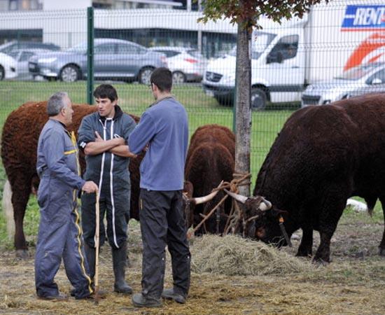 ZOOTECNIA - É a busca de maior produtividade e rentabilidade na criação de animais e no desenvolvimento de produtos como carne, ovos, leite e seus derivados.