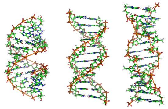 Essas células apresentam também maior quantidade de DNA. Os cromossomos ficam separados do citoplasma pelo envoltório nuclear. (Foto: Creative Commons)