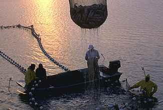engenharia-de-pesca-325×220.jpg