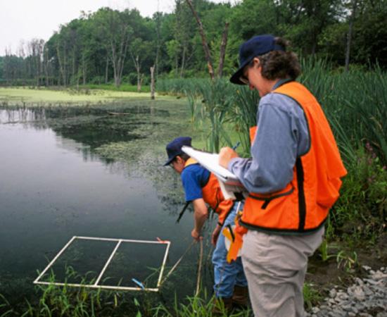 Engenharia Florestal - É o ramo da engenharia voltado para o estudo e o uso sustentável de recursos florestais. O engenheiro florestal avalia o potencial de ecossistemas florestais e planeja seu aproveitamento de modo a preservar a flora e a fauna locais.