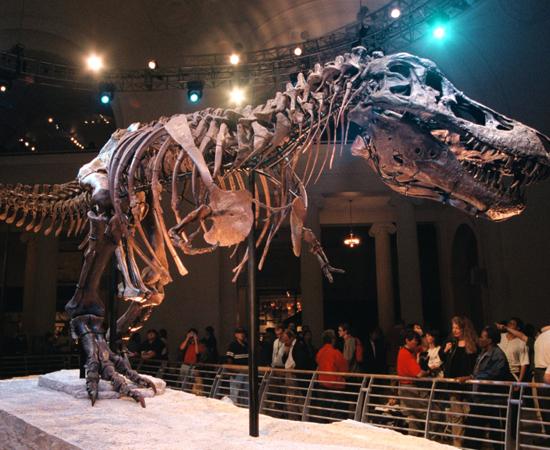 MESOZOICA - A era Mesozoica iniciou-se a cerca de 250 milhões de anos atrás, ela ficou marcada pelo intenso vulcanismo e consequente derrame de lavas em várias partes do globo. Também ficou caracterizada pelo processo de sedimentação dos fundos marinhos, que originou grande parte das jazidas petrolíferas hoje conhecidas. Outras características dessa era geológica são: divisão do grande continente da Pangeia, surgimento de grandes répteis, como, por exemplo, o dinossauro, surgimento de animais mamíferos, desenvolvimento de flores nas plantas.