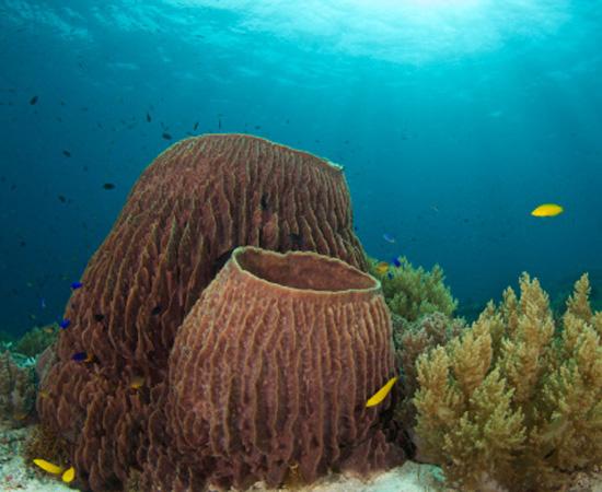 São as esponjas, que têm poros e canais para circulação da água e nutrientes. São invertebrados.