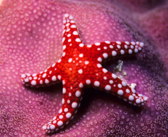 Animais marinhos de esqueleto interno calcário, como estrelas-do-mar e pepinos-do-mar. São invertebrados.