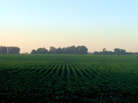 Outro item utilizado na agricultura aparece no sexto lugar do ranking. Os fertilizantes são responsáveis por 4% do total de importações de nosso país.