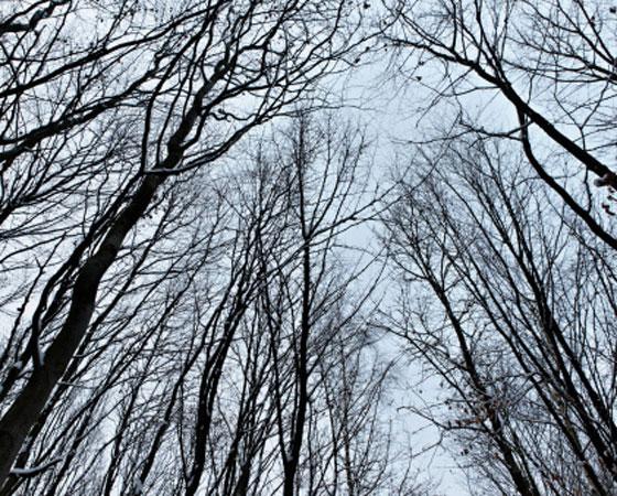 <strong>Floresta Temperada -</strong>Todos os países do leste asiático apresentam o mesmo tipo de flora: a floresta temperada. Típica das latitudes médias, - aparece originalmente também no leste dos Estados Unidos, na Europa e no sudeste da Austrália e Nova Zelândia - , essa floresta é formada por árvores decíduas, chamadas ainda de caducas, ou seja, que perdem as folhas no inverno para suportar as baixas temperaturas,. As poucas espécies de árvores, como carvalhos, bordos e faias, são espaçadas, e o solo é recoberto por gramíneas. Grande parte da floresta temperada, contudo, já foi devastada - na Europa, por exemplo, de 70% a 80% da cobertura original já foi perdida; na China, de 80% a 90%.