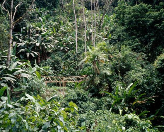 <strong>Floresta Tropical -</strong>Esse tipo de flora é um grande conhecido nosso, basta pensar na Amazônia. É uma vegetação de baixas latitudes, de regiões quentes e úmidas; as plantas têm folhas largas (latifoliadas), que absorvem mais energia solar, e são perenes, isto é, não caem no inverno. O solo é coberto por húmus, formado pela decomposição de galhos, troncos e folhas. Além do Sudeste Asiático, as florestas tropicais, cobrem grande parte da América do Sul, da América Central, da zona equatorial da África e do Subcontinente Indiano.