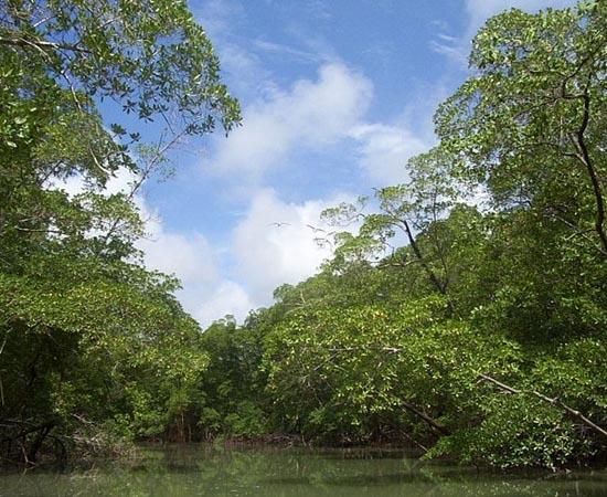 FLORESTA TROPICAL - Estude as características desta vegetação bastante comum no Brasil.