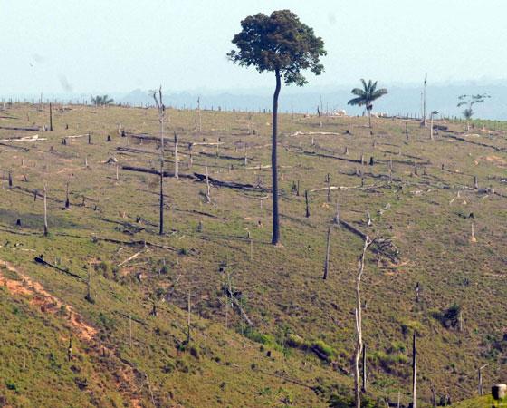 """No Enem 2008 a proposta pedia uma resposta para: """"Como preservar a floresta Amazônica"""". Foram sugeridas três possibilidades - suspender imediatamente o desmatamento; dar incentivo financeiros a proprietários que deixarem de desmatar; ou aumentar a fiscalização e aplicar multas a quem desmatar. O Guia publicou duas análises de redação com dicas sobre o tema. Podem ser conferidas <a href=""""http://guiadoestudante.abril.com.br/blog/redacao-para-o-enem-e-vestibular/analise-da-redacao-tema-como-preservar-a-floresta-amazonica/"""" target=""""_blank"""" rel=""""noopener"""">aqui</a> e <a href=""""http://guiadoestudante.abril.com.br/blog/redacao-para-o-enem-e-vestibular/analise-de-redacao-a-importancia-de-proteger-a-floresta-amazonica/"""" target=""""_blank"""" rel=""""noopener"""">aqui</a>. Sobre o assunto, <a href=""""http://guiadoestudante.abril.com.br/curso-enem-play/atualidades-ciencias-e-meio-ambiente-desmatamento/"""" target=""""_blank"""" rel=""""noopener"""">vale a pena conferir um texto de atualidades</a> do Curso Enem."""