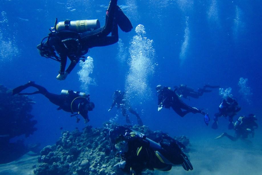 Negócios e Tecnologia do Mergulho - A Florida Keys Community College oferece esse curso que pode ser o sonho dos amantes de praia. A grade mistura ciência com a instrução de mergulho, e com o diploma é possível ser instrutor de mergulho, mergulhador de investigação e até fotojornalista subaquático.