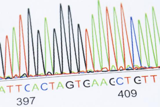 As bases nitrogenadas podem pertencer a dois grupos, o das bases púricas (adenina e guanina) e o das pirimídicas (timina, citosina e uracila). As bases púricas existem tanto no DNA quanto no RNA. Já das bases pirimídicas, a timina é exclusiva do DNA e a uracila do RNA, enquanto a citosina é comum para ambos. (Imagem: iStock)