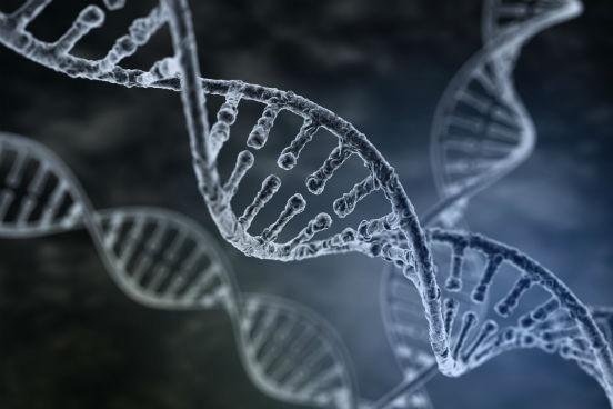 O DNA contém as informações genéticas de todos os seres vivos e de alguns vírus. Assim, todas as características hereditárias são transmitidas devido a essa molécula. Cada indivíduo possui uma sequência única de nucleotídeos que formam o DNA, o que além de caracterizar a espécie garante a individualidade do organismo. (Imagem: iStock)