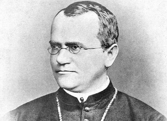 A base da teoria genética clássica são as famosas Leis de Mendel. Foi o padre Gregor Mendel  que descobriu, por meio do cruzamento entre diferentes tipos de ervilhas, os genes, elementos hereditários e os conceitos de genes recessivos (que tendem a ser mais raros em uma população) e dominantes (que tendem a se manifestar mais vezes dentro de uma população) (Foto: Creative Commons)
