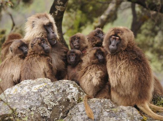 O exemplo mais conhecido é o do homem e do macaco. Ao contrário do que dizem, o homem não descende do macaco, mas tem um ancestral comum a ele, muito próximo na escala evolutiva. Isso é evidenciado pelas semelhanças entre as duas espécies.