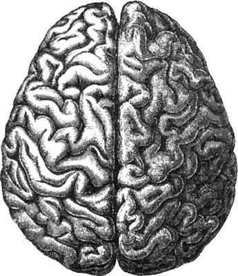 NEUROPSICOLOGIA - Atua no diagnóstico, tratamento e pesquisa da cognição, emoções, personalidade e comportamento com foco na relação entre esses aspectos e o funcionamento cerebral.