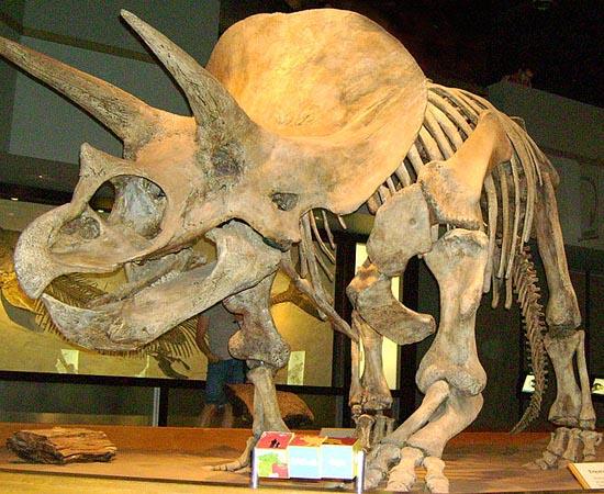 ORIGEM DA VIDA NA TERRA - Estude sobre a Era Arqueozoica, a Era Proterozoica, a Era Paleozoica, a Era Mesozoica e a Era Cenozoica.