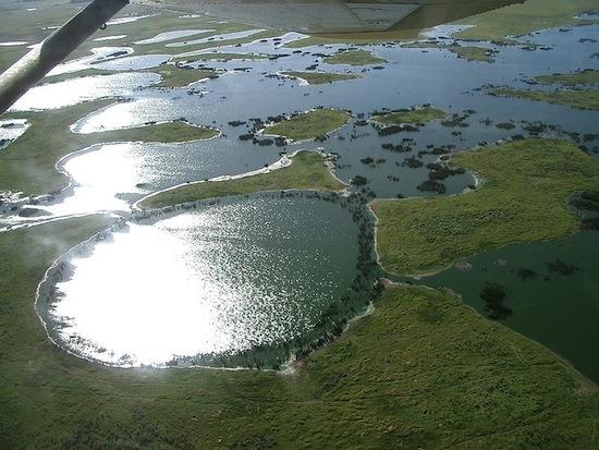 PANTANAL - Presente nos estados do Mato Grosso e Mato Grosso do Sul, o pantanal tem inundações de longa duração, o que provoca alterações na vida silvestre e na vegetação, que é caracterizada pela savana. Grande parte da área que circunda o pantanal foi substituida por pastos e lavouras.