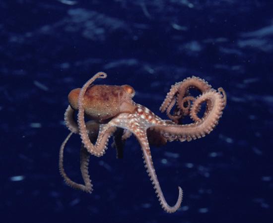 Seres de corpo mole, não segmentado. Podem ser marinhos ou terrestres, como lesmas, lulas e polvos. São invertebrados.
