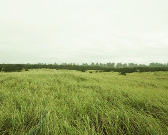 <strong>Estepe (Campos, Pampas, Pradaria) -</strong>Típica de áreas de clima temperado continental, a estepe é uma formação vegetal pobre, sem árvores, constituída basicamente de gramíneas, que se estende em regiões planas. Dependendo da área onde se localiza, recebe um nome diferente: campos, no Brasil; pampas, na Argentina; pradaria, nos Estados Unidos e Canadá e estepes, na Rússia. Essa flora também é encontrada na África e em trechos da Austrália.