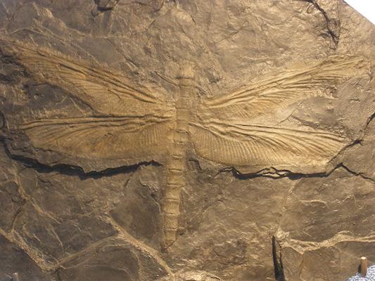 Hoje em dia, o estudo dos registros fósseis ajudou a reconstruir com precisão a história evolutiva na Terra, desde as primeiras formas de vida. Analisar os fósseis encontrados ajudou os cientistas a perceberem que todas as espécies, mesmo as já extintas, estão cronologicamente relacionadas e que elas mudam ao longo do tempo.