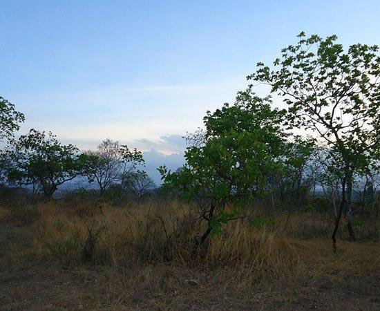 SAVANA - Estude as características deste tipo de vegetação.