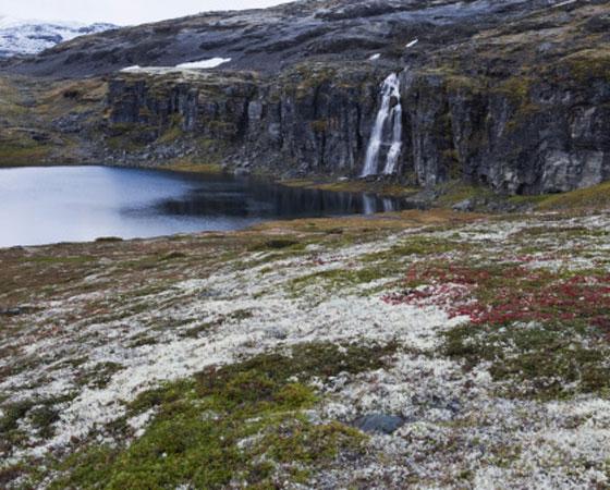 <strong>Tundra -</strong>É encontrada em uma das regiões mais frias do planeta, a do clima subpolar. A vegetação é típica das altas latitudes (paralela ao Círculo Polar Ártico, pelo extremo norte do Canadá e do Alasca, até chegar ao norte da Rússia). É formada por musgos e algumas espécies herbáceas que aparecem no solo somente nos poucos meses de degelo, quando o verão eleva a temperatura para 4ºC, em média. No resto do ano, o solo fica coberto de neve. (foto: Getty Images)