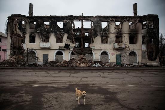 Um cão passa por um edifício destruído pela guerra em Uglegorsk, Ucrânia. (Foto: Andrew Burton / Getty Images)