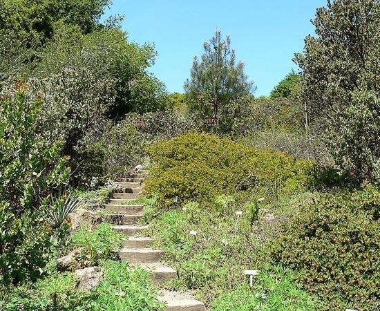 VEGETAÇÃO MEDITERRÂNEA - Estude as características deste tipo de vegetação.