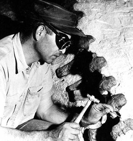 427px-paleontologist_chipping