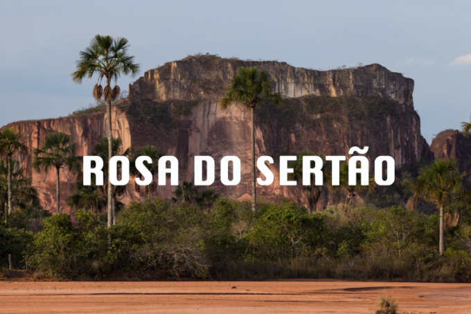 rosa-do-sertao-3×2