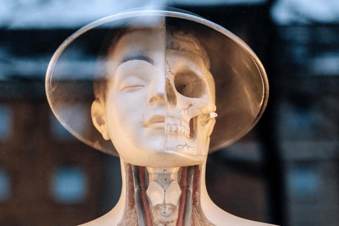 Gif incrível mostra como a medicina estudava o cérebro e os olhos no século 16