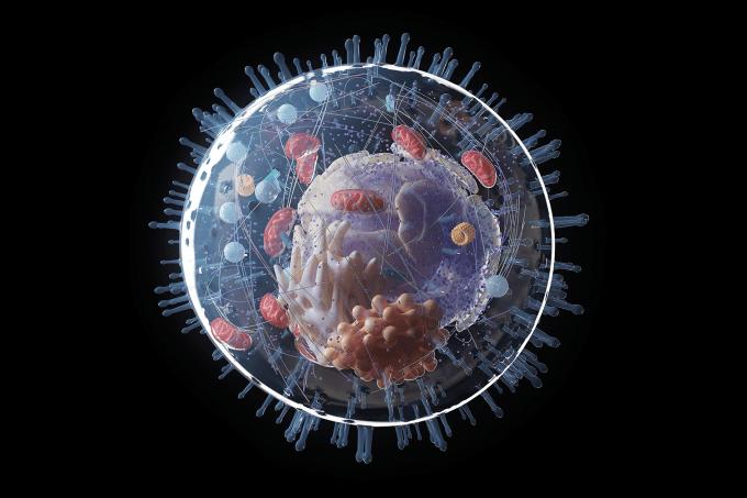 O que você precisa saber sobre as organelas das células eucarióticas