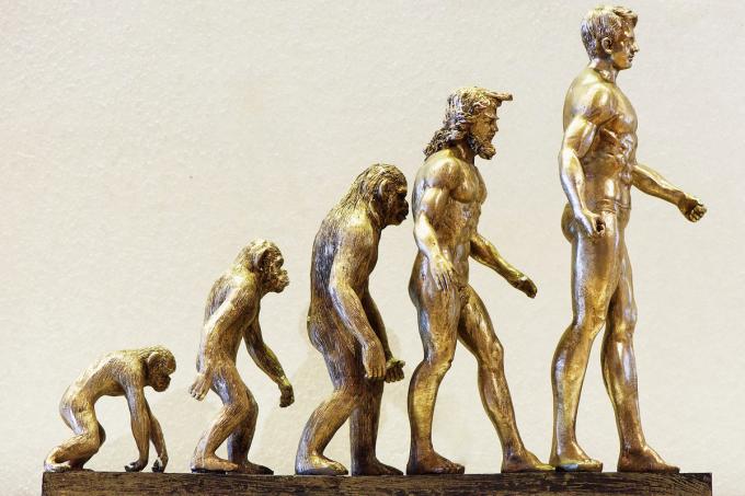 O que você precisa saber sobre a Teoria da Evolução