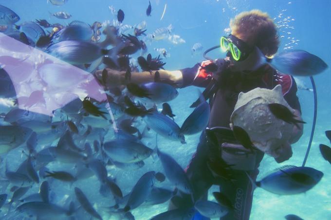 [Orientação] Como é o mercado de trabalho para o biólogo marinho?
