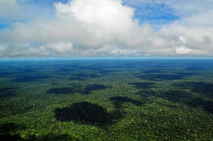 Análise de redação- A importância de proteger a Floresta Amazônica