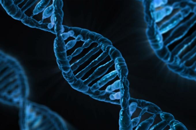 Biologia – Genes letais