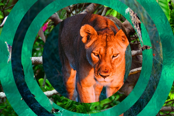 Relembre os filos do Reino Animal e prepare-se para o vestibular