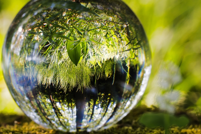5 documentários sobre meio ambiente
